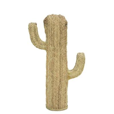 Cactus Esparto M