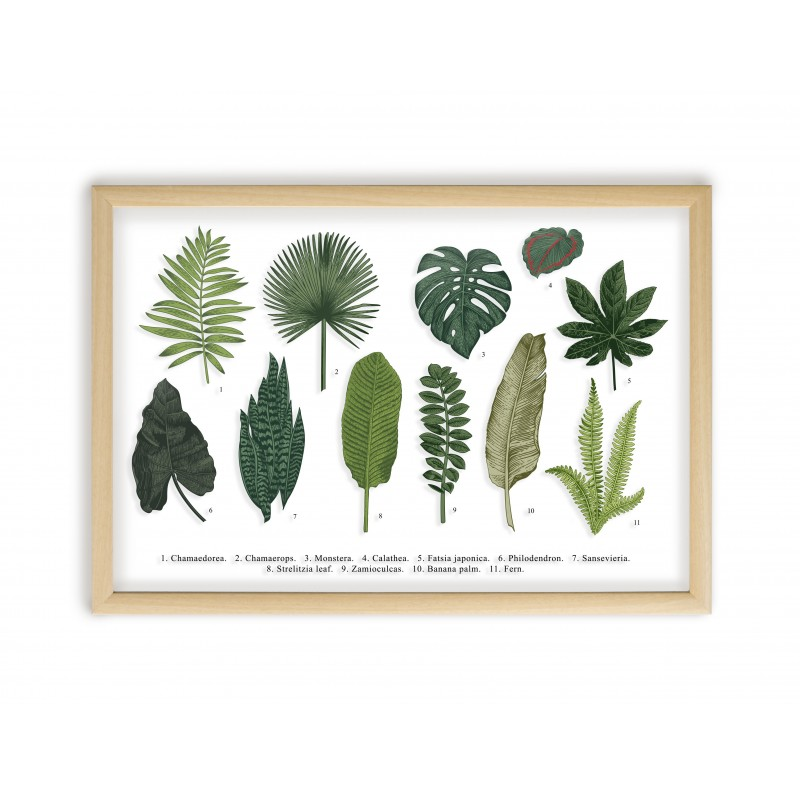 Leaves Guide Natural Frame