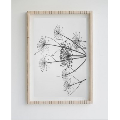 Painting Limited Edition Dandelion
