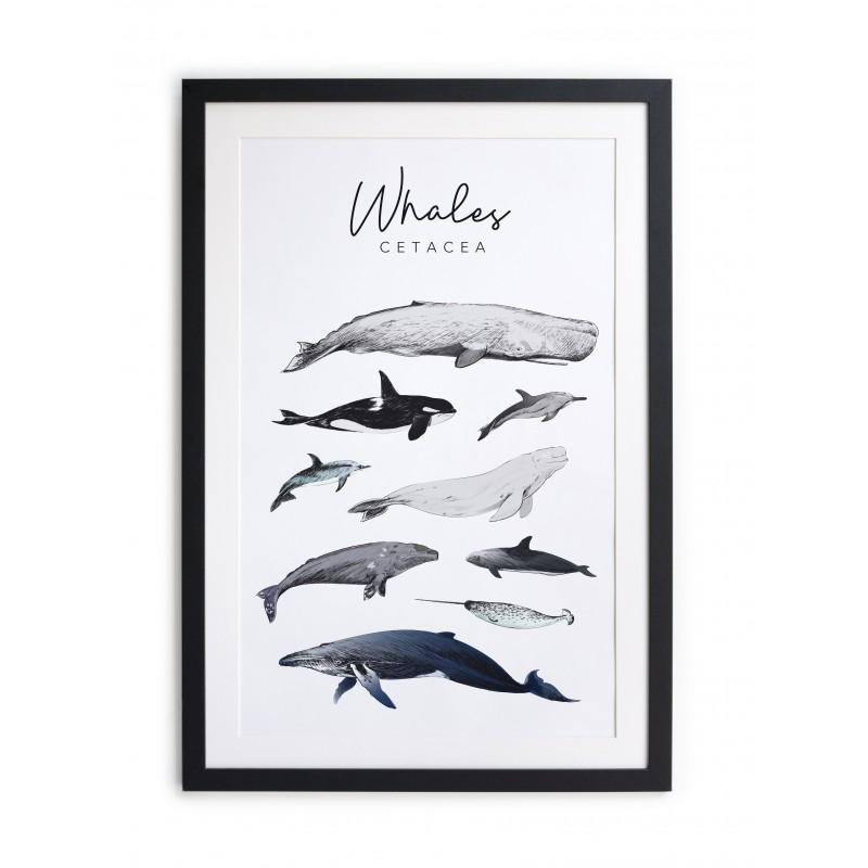 Cuadro moldura negra 60x40 Whales